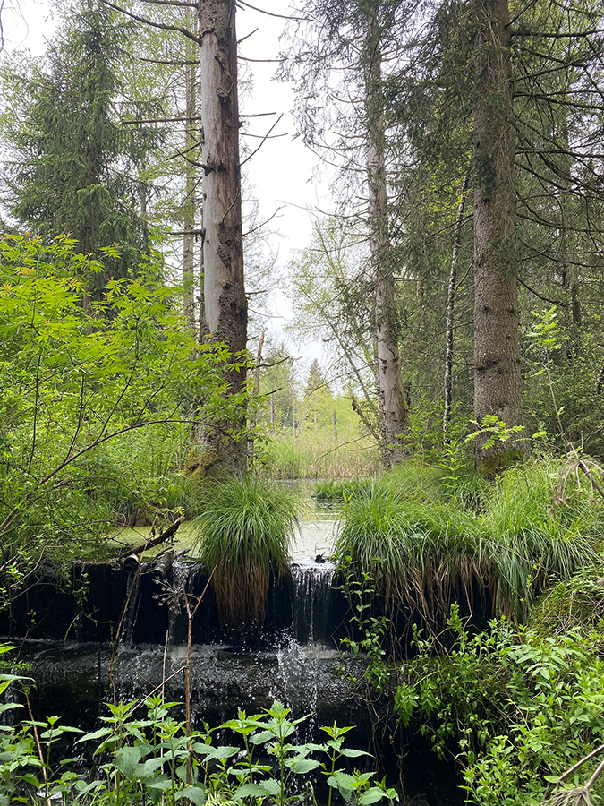Triage forestier